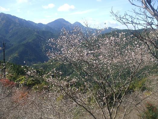 121109sakurayama1.jpg