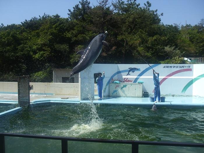 130412inubouzaki 051.jpg
